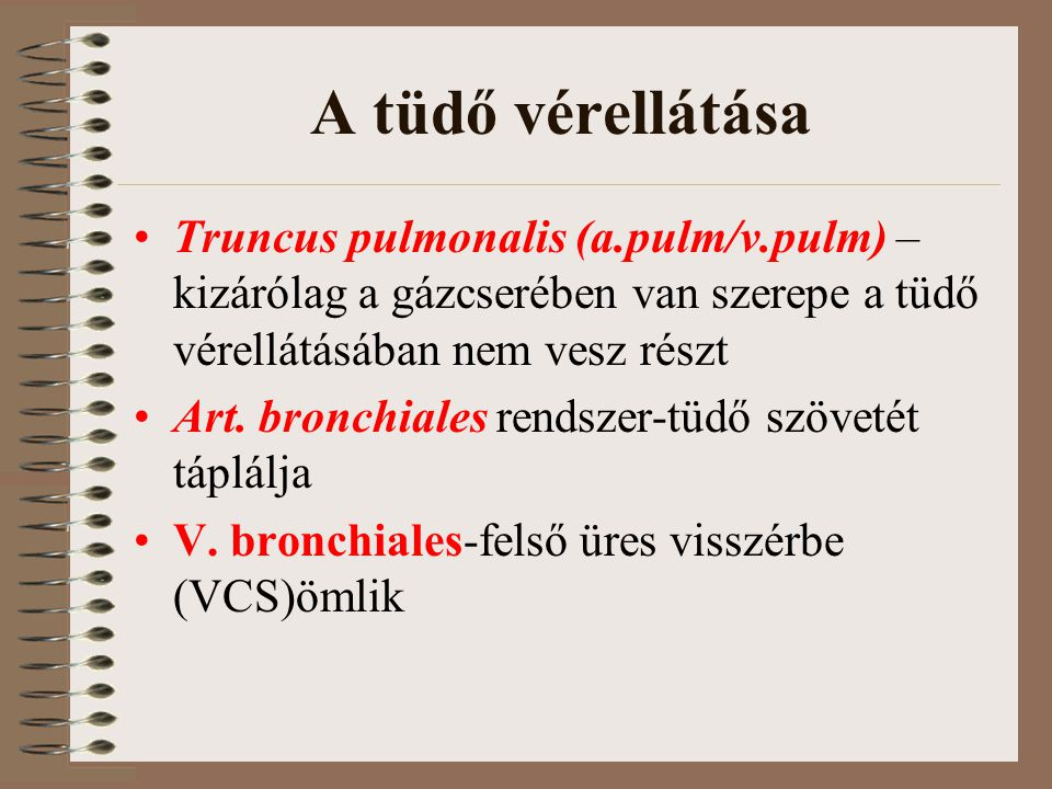 A tüdő vérellátása Truncus pulmonalis (a.pulm/v.pulm) – kizárólag a gázcserében van szerepe a tüdő vérellátásában nem vesz részt Art. bronchiales rend