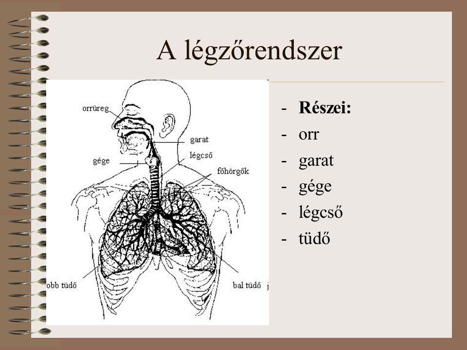 Kezelés Oki therápia O 2 pótlás/ lélegeztetés