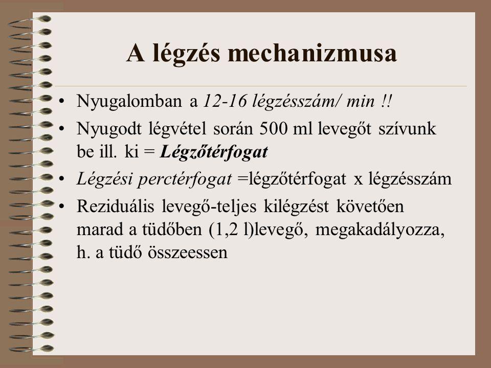 A légzés mechanizmusa Nyugalomban a 12-16 légzésszám/ min !.