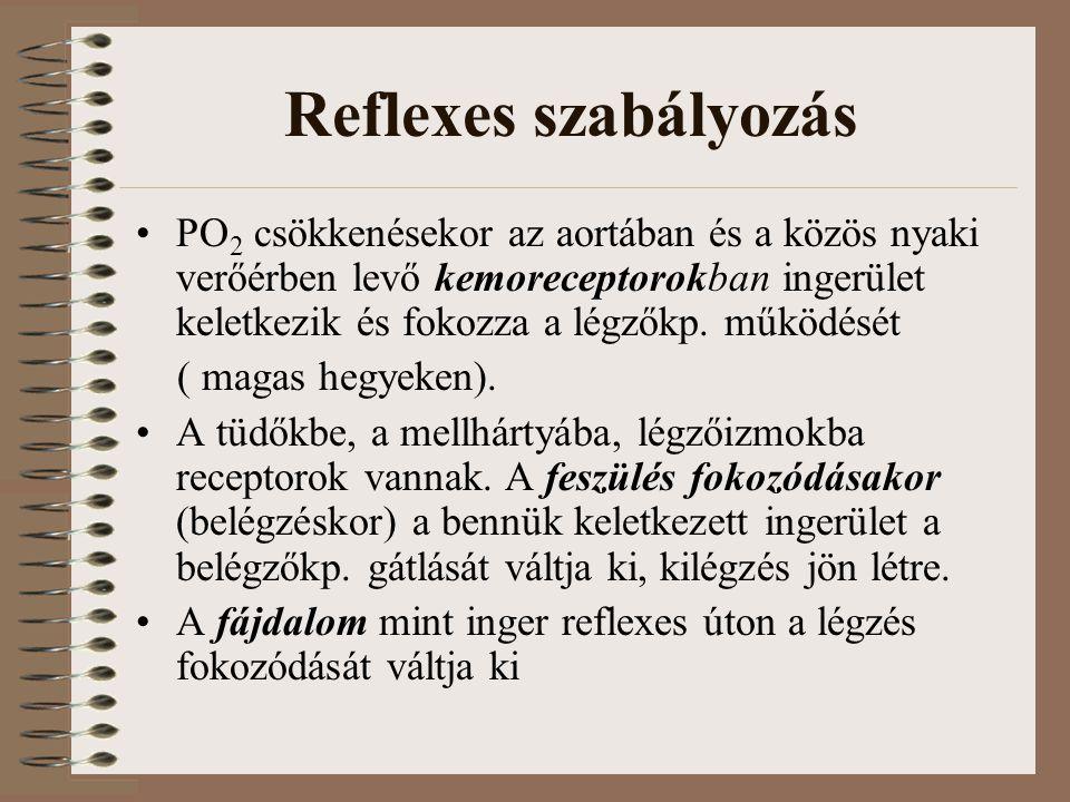 Reflexes szabályozás PO 2 csökkenésekor az aortában és a közös nyaki verőérben levő kemoreceptorokban ingerület keletkezik és fokozza a légzőkp.