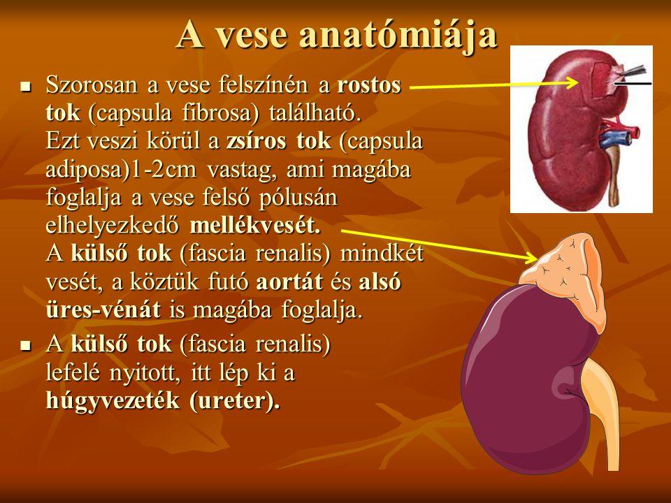 A vese anatómiája Szorosan a vese felszínén a rostos tok (capsula fibrosa) található. Ezt veszi körül a zsíros tok (capsula adiposa)1-2cm vastag, ami