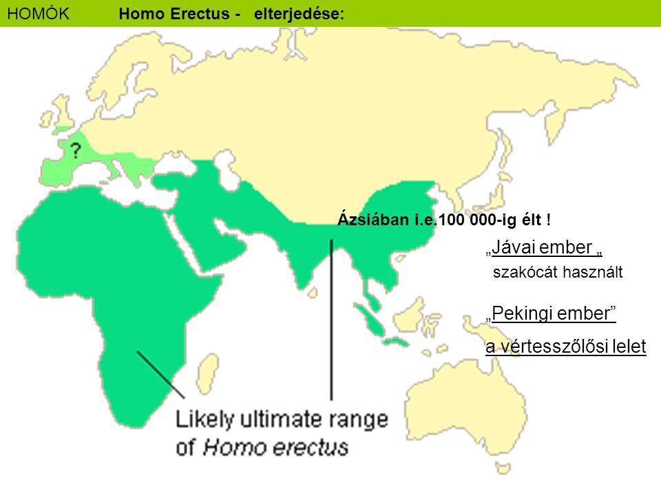 """""""Jávai ember """" """"Pekingi ember"""" a vértesszőlősi lelet HOMÓKHomo Erectus - elterjedése: Ázsiában i.e.100 000-ig élt ! szakócát használt"""