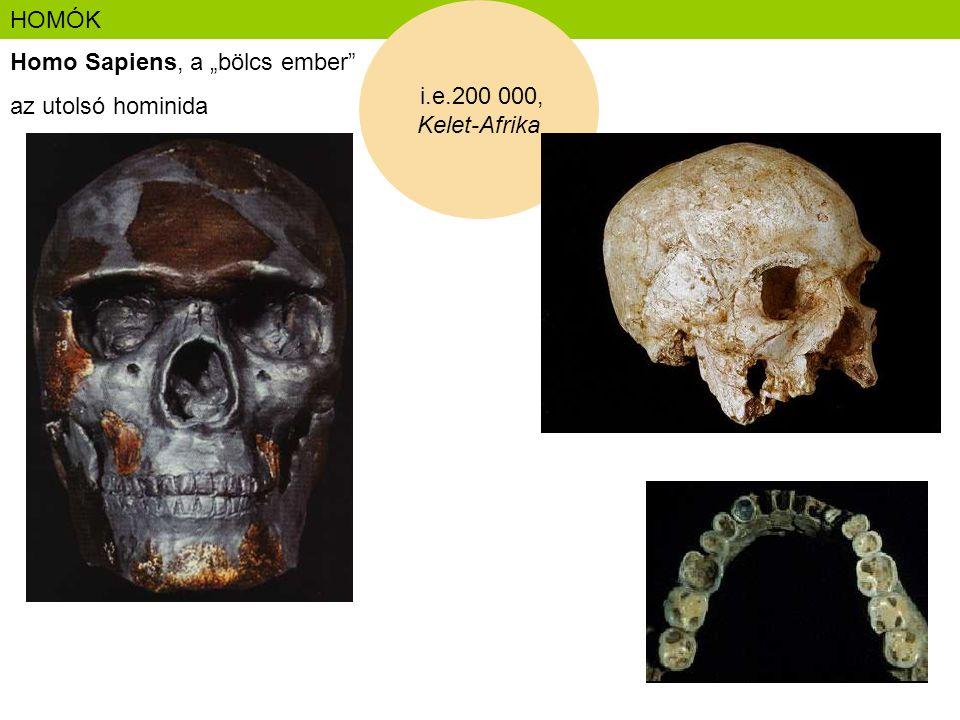 """HOMÓK Homo Sapiens, a """"bölcs ember"""" az utolsó hominida i.e.200 000, Kelet-Afrika"""