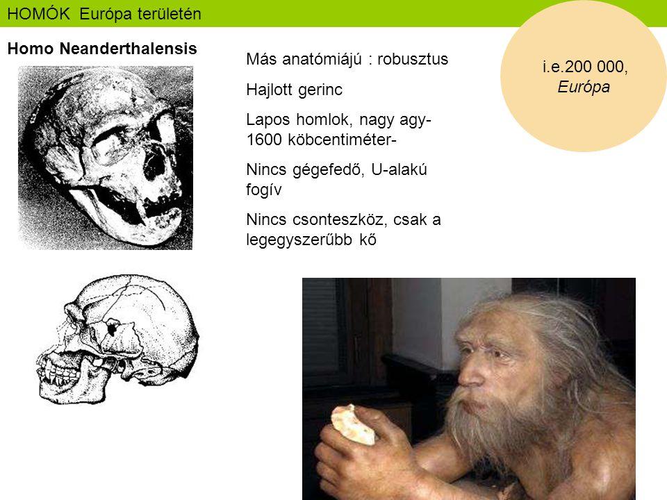 HOMÓK Európa területén Homo Neanderthalensis i.e.200 000, Európa Más anatómiájú : robusztus Hajlott gerinc Lapos homlok, nagy agy- 1600 köbcentiméter-