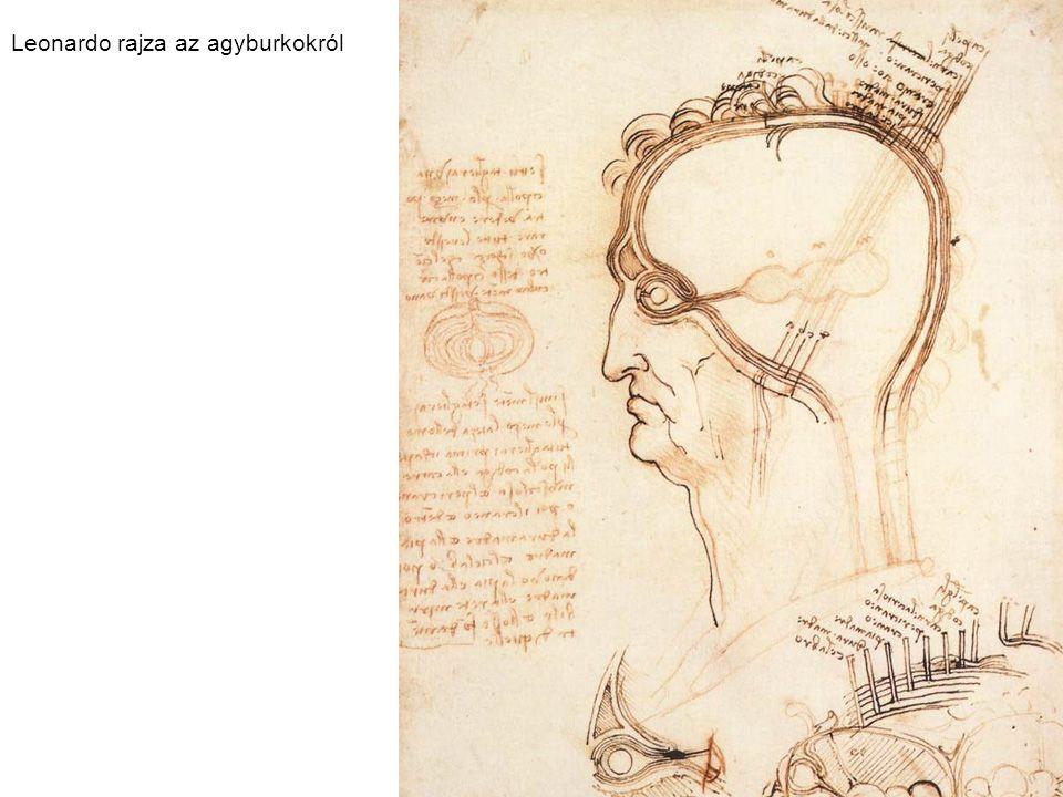 Leonardo rajza az agyburkokról