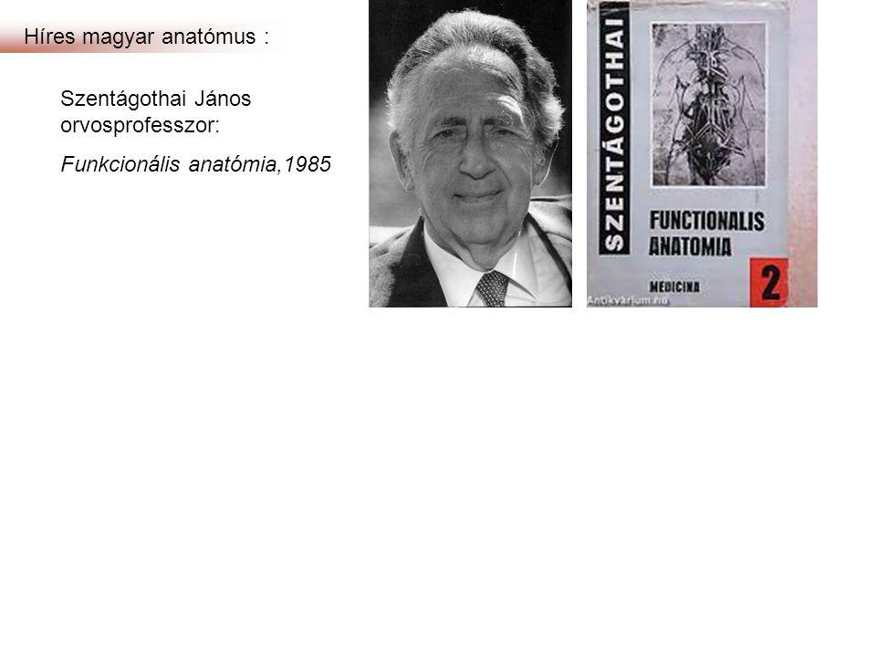 Híres magyar anatómus : Szentágothai János orvosprofesszor: Funkcionális anatómia,1985