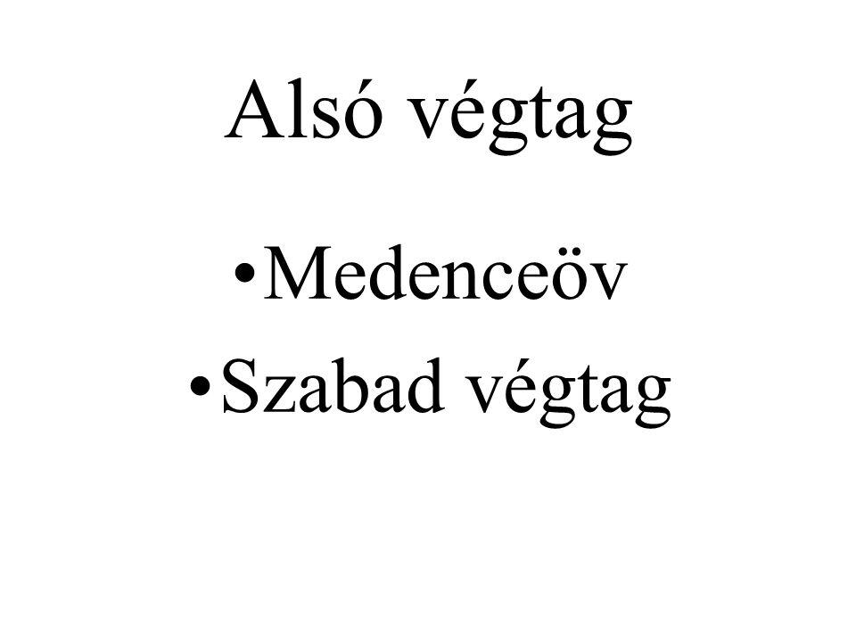 Alsó végtag Medenceöv Szabad végtag