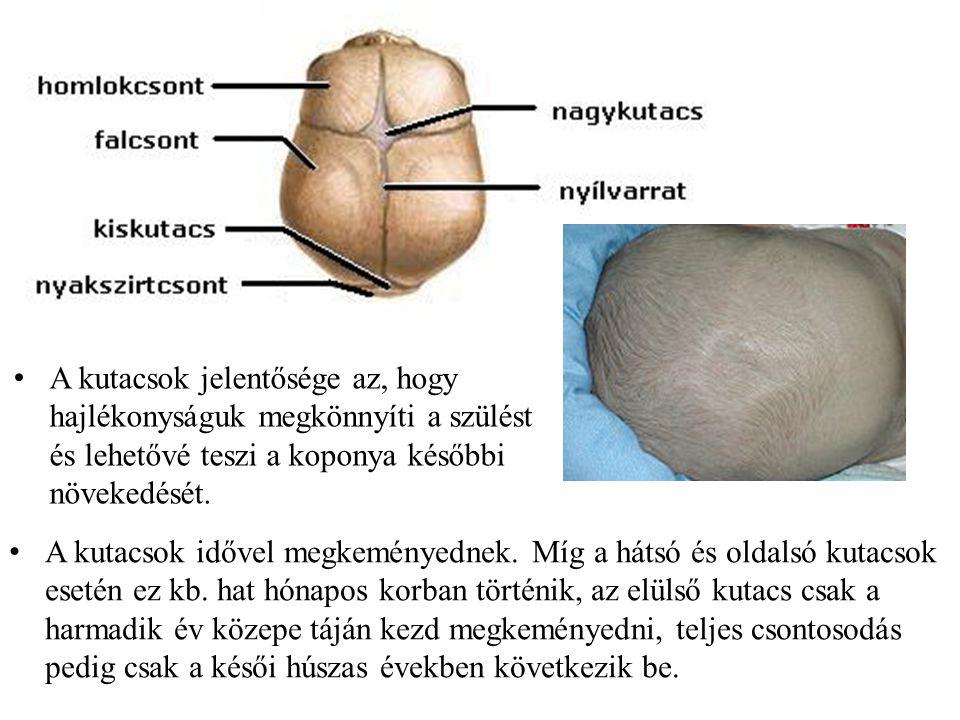 Gerincferdülés (scoliosis) gerincoszlop kóros oldalirányú elgörbülése, melyet a csigolyák egymáson való elmozdulása, elcsavarodása okoz.