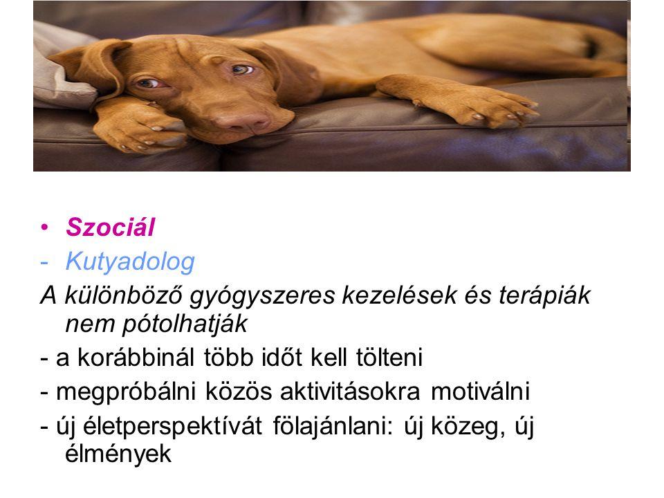 Szociál -Kutyadolog A különböző gyógyszeres kezelések és terápiák nem pótolhatják - a korábbinál több időt kell tölteni - megpróbálni közös aktivitáso