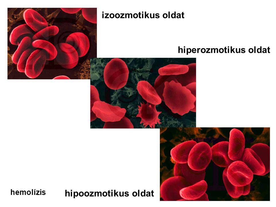 izoozmotikus oldat hiperozmotikus oldat hipoozmotikus oldat hemolízis