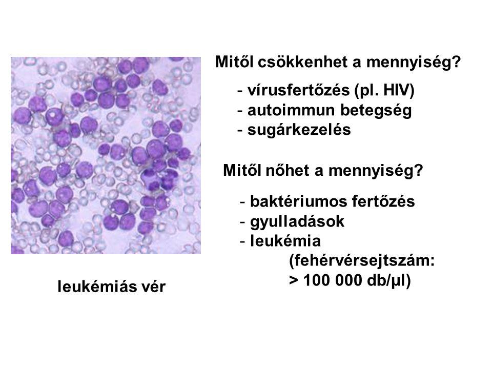 leukémiás vér Mitől csökkenhet a mennyiség? - vírusfertőzés (pl. HIV) - autoimmun betegség - sugárkezelés Mitől nőhet a mennyiség? - baktériumos fertő