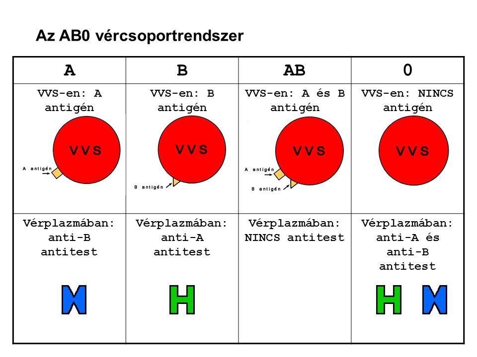 Az AB0 vércsoportrendszer ABAB0 VVS-en: A antigén VVS-en: B antigén VVS-en: A és B antigén VVS-en: NINCS antigén Vérplazmában: anti-B antitest Vérplaz