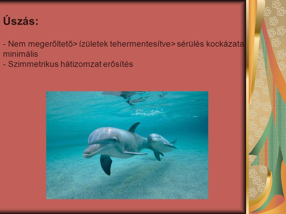 Úszás: - Nem megerőltető> ízületek tehermentesítve> sérülés kockázata minimális - Szimmetrikus hátizomzat erősítés