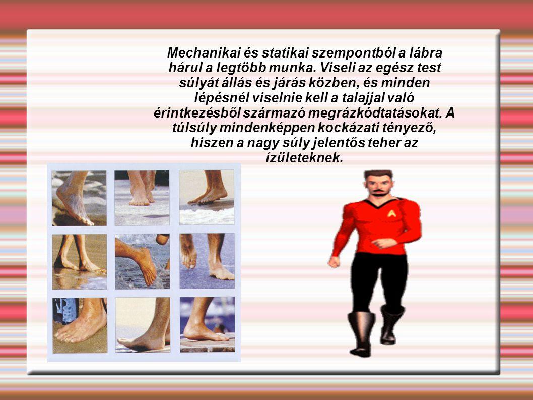 Mechanikai és statikai szempontból a lábra hárul a legtöbb munka. Viseli az egész test súlyát állás és járás közben, és minden lépésnél viselnie kell