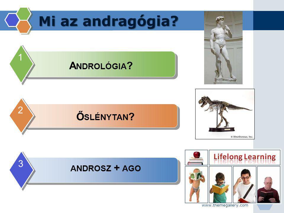 www.themegallery.com Mi az andragógia? 1 Ő SLÉNYTAN ? 2 ANDROSZ + AGO 3 A NDROLÓGIA ?