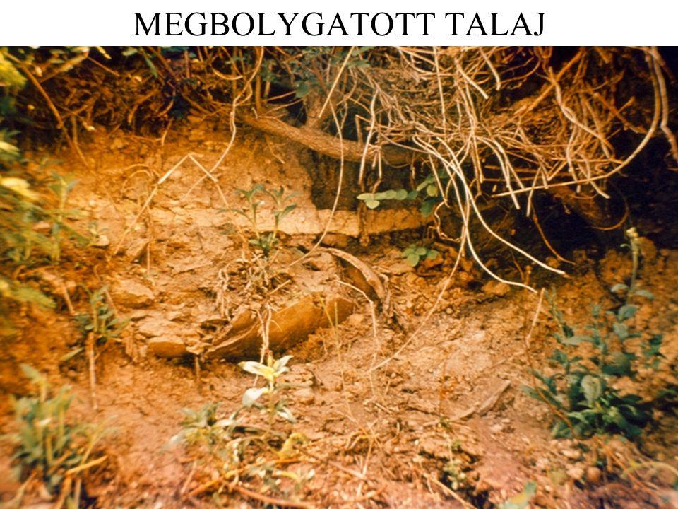 MEGBOLYGATOTT TALAJ