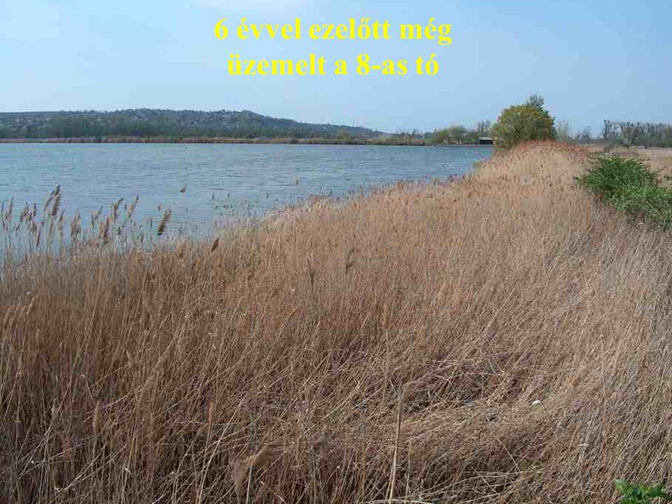 6 évvel ezelőtt még üzemelt a 8-as tó