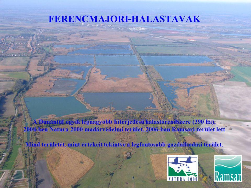 FERENCMAJORI-HALASTAVAK A Dunántúl egyik legnagyobb kiterjedésű halastórendszere (390 ha), 2004-ben Natura 2000 madárvédelmi terület, 2006-ban Ramsari-terület lett Mind területét, mint értékeit tekintve a legfontosabb gazdálkodási terület.