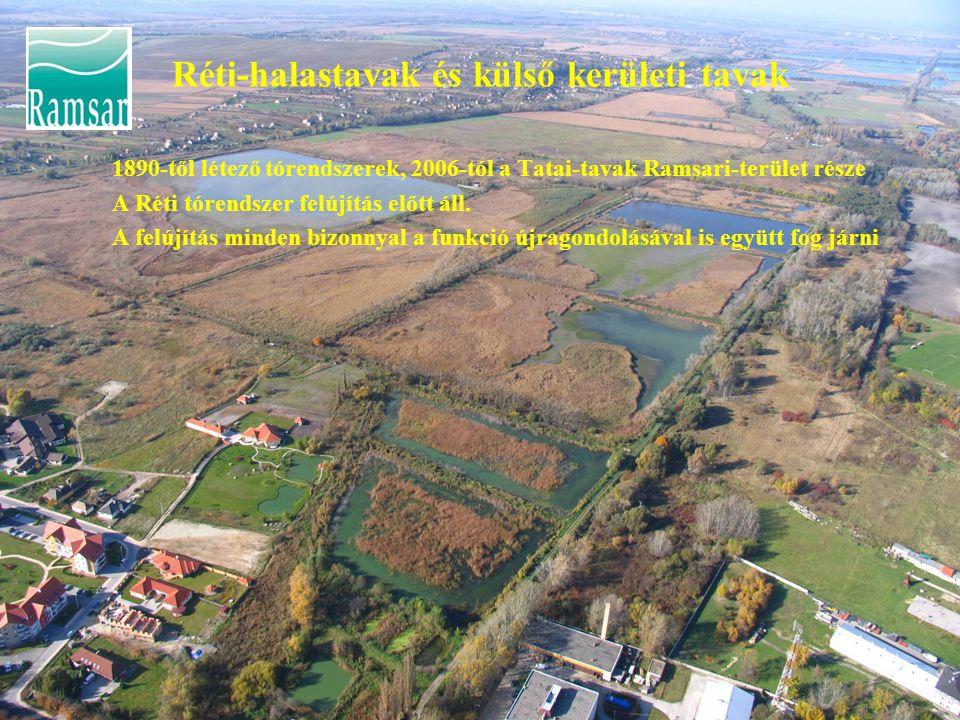 Réti-halastavak és külső kerületi tavak 1890-től létező tórendszerek, 2006-tól a Tatai-tavak Ramsari-terület része A Réti tórendszer felújítás előtt áll.