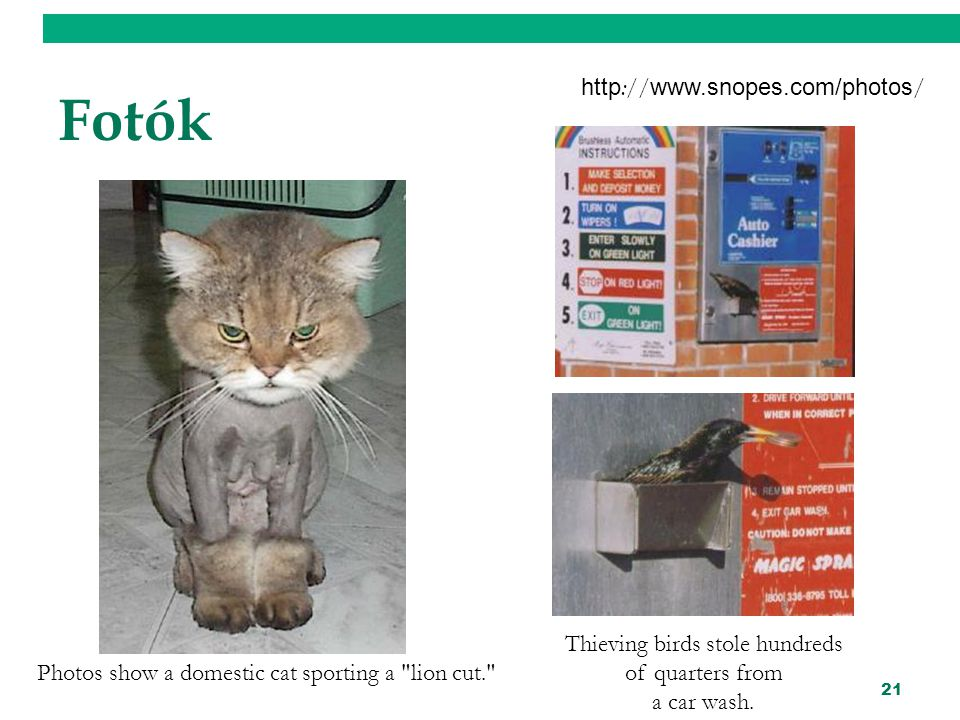 21 Fotók http :// www.snopes.com/photos / Photos show a domestic cat sporting a