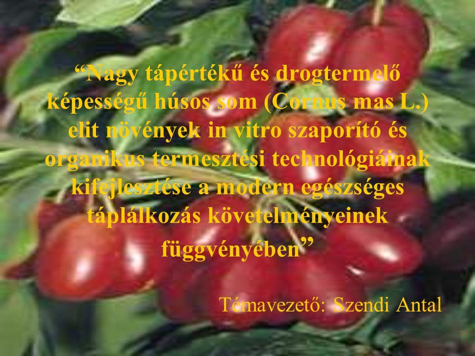 """""""Nagy tápértékű és drogtermelő képességű húsos som (Cornus mas L.) elit növények in vitro szaporító és organikus termesztési technológiáinak kifejlesz"""