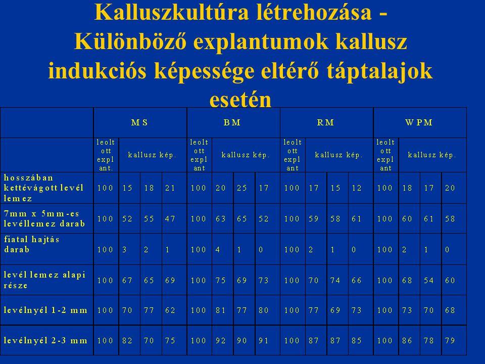 Kalluszkultúra létrehozása - Különböző explantumok kallusz indukciós képessége eltérő táptalajok esetén