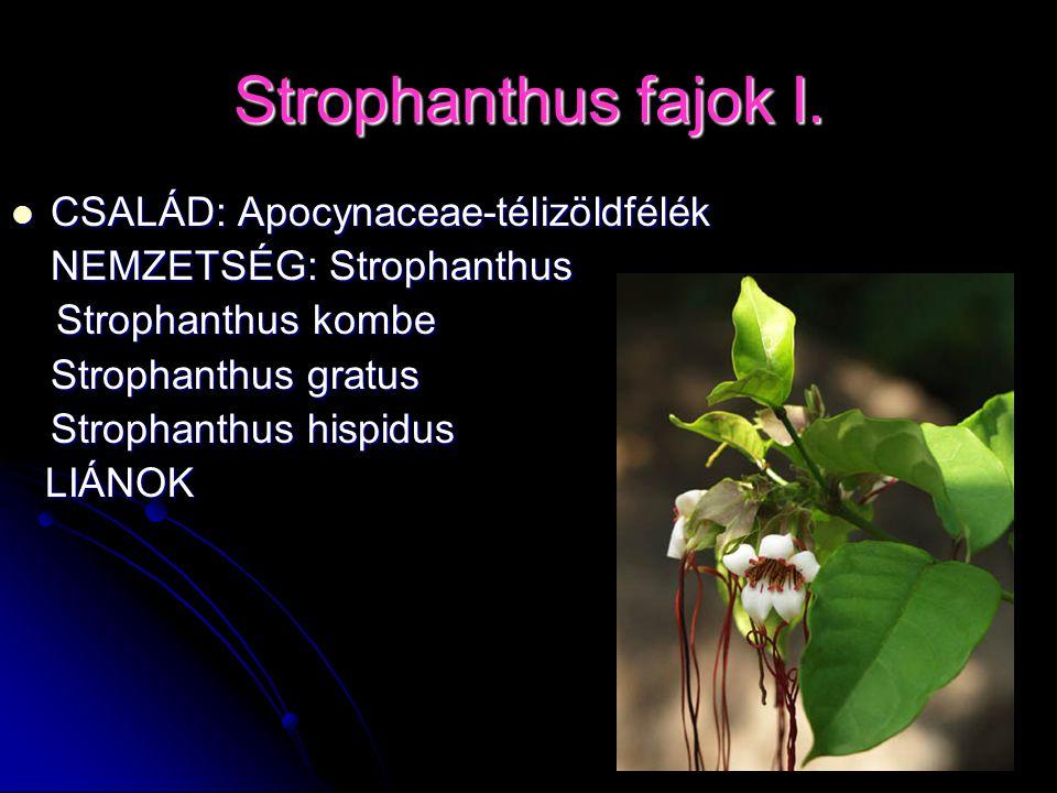 Strophanthus fajok I. CSALÁD: Apocynaceae-télizöldfélék CSALÁD: Apocynaceae-télizöldfélék NEMZETSÉG: Strophanthus Strophanthus kombe Strophanthus komb