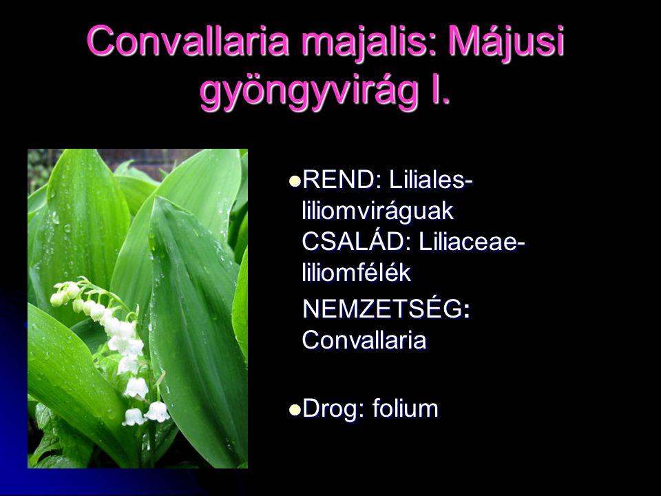 Convallaria majalis: Májusi gyöngyvirág I. REND: Liliales- liliomviráguak CSALÁD: Liliaceae- liliomfélék REND: Liliales- liliomviráguak CSALÁD: Liliac
