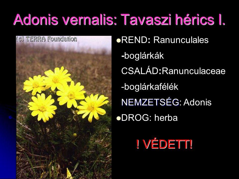 Adonis vernalis: Tavaszi hérics I. REND: Ranunculales -boglárkák CSALÁD:Ranunculaceae -boglárkafélék NEMZETSÉG NEMZETSÉG: Adonis DROG: herba ! VÉDETT!