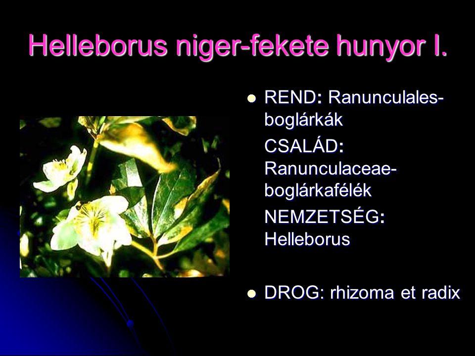 Helleborus niger-fekete hunyor I. REND: Ranunculales- boglárkák REND: Ranunculales- boglárkák CSALÁD: Ranunculaceae- boglárkafélék NEMZETSÉG: Hellebor