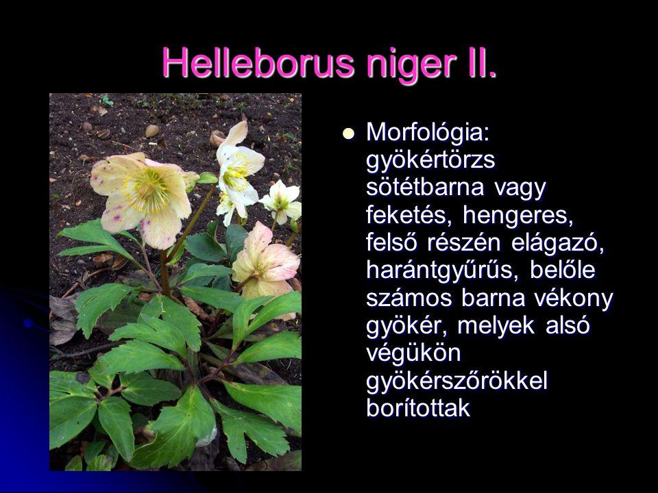 Helleborus niger II. Morfológia: gyökértörzs sötétbarna vagy feketés, hengeres, felső részén elágazó, harántgyűrűs, belőle számos barna vékony gyökér,