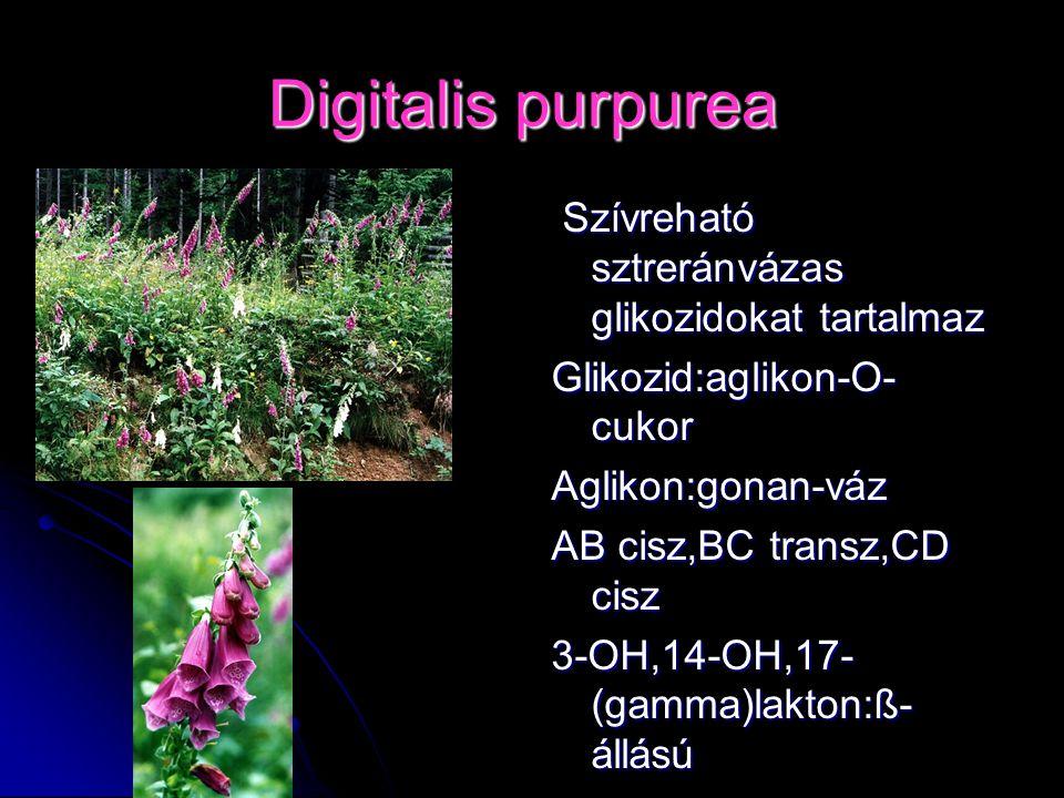 Digitalis purpurea Szívreható sztreránvázas glikozidokat tartalmaz Szívreható sztreránvázas glikozidokat tartalmaz Glikozid:aglikon-O- cukor Aglikon:g