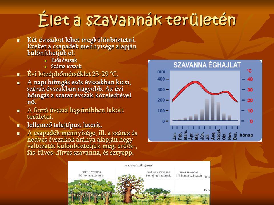 Élet a szavannák területén Két évszakot lehet megkülönböztetni. Ezeket a csapadék mennyisége alapján különíthetjük el: Két évszakot lehet megkülönbözt