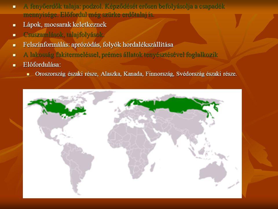 A fenyőerdők talaja: podzol. Képződését erősen befolyásolja a csapadék mennyisége. Előfordul még szürke erdőtalaj is. A fenyőerdők talaja: podzol. Kép