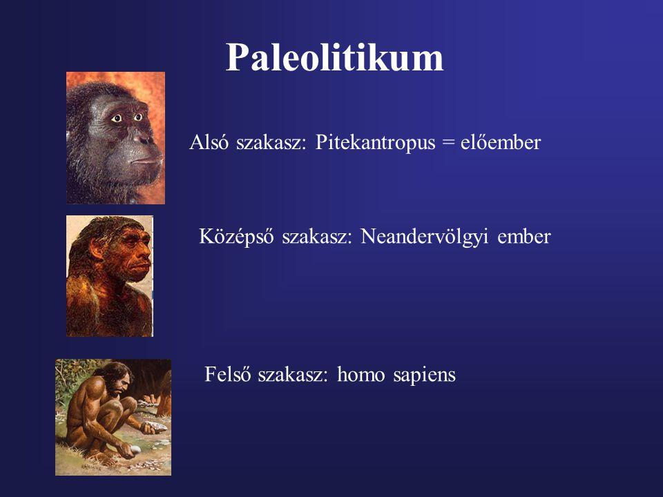 Paleolitikum Alsó szakasz: Pitekantropus = előember Középső szakasz: Neandervölgyi ember Felső szakasz: homo sapiens