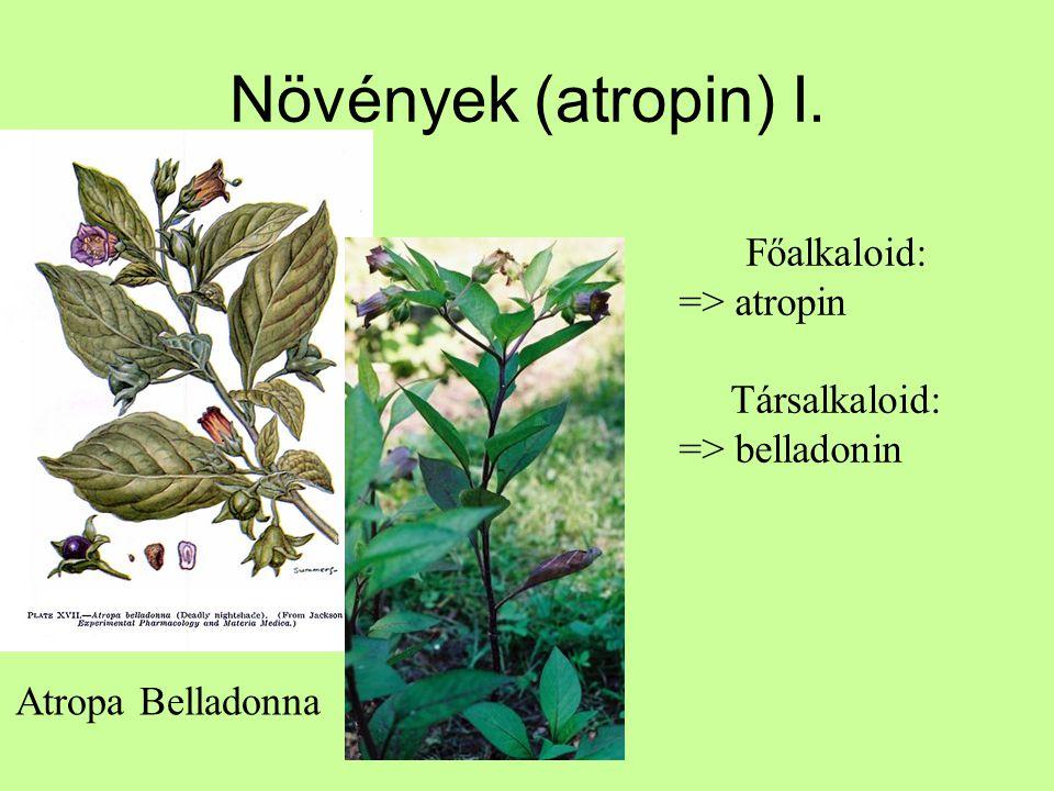 Növények (atropin) I. Atropa Belladonna Főalkaloid: => atropin Társalkaloid: => belladonin