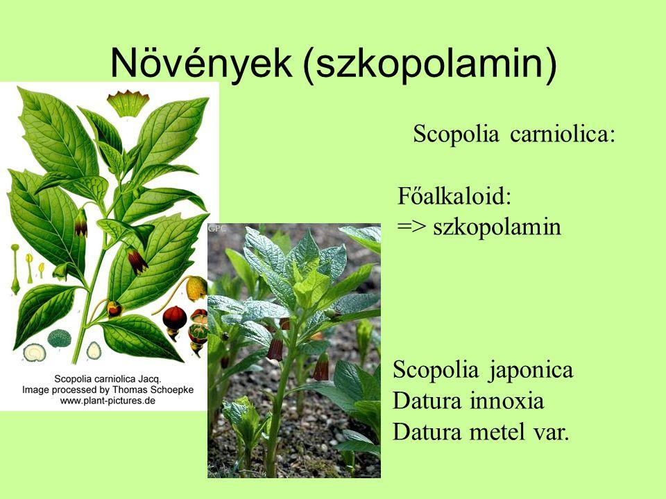Növények (szkopolamin) Scopolia carniolica: Főalkaloid: => szkopolamin Scopolia japonica Datura innoxia Datura metel var.