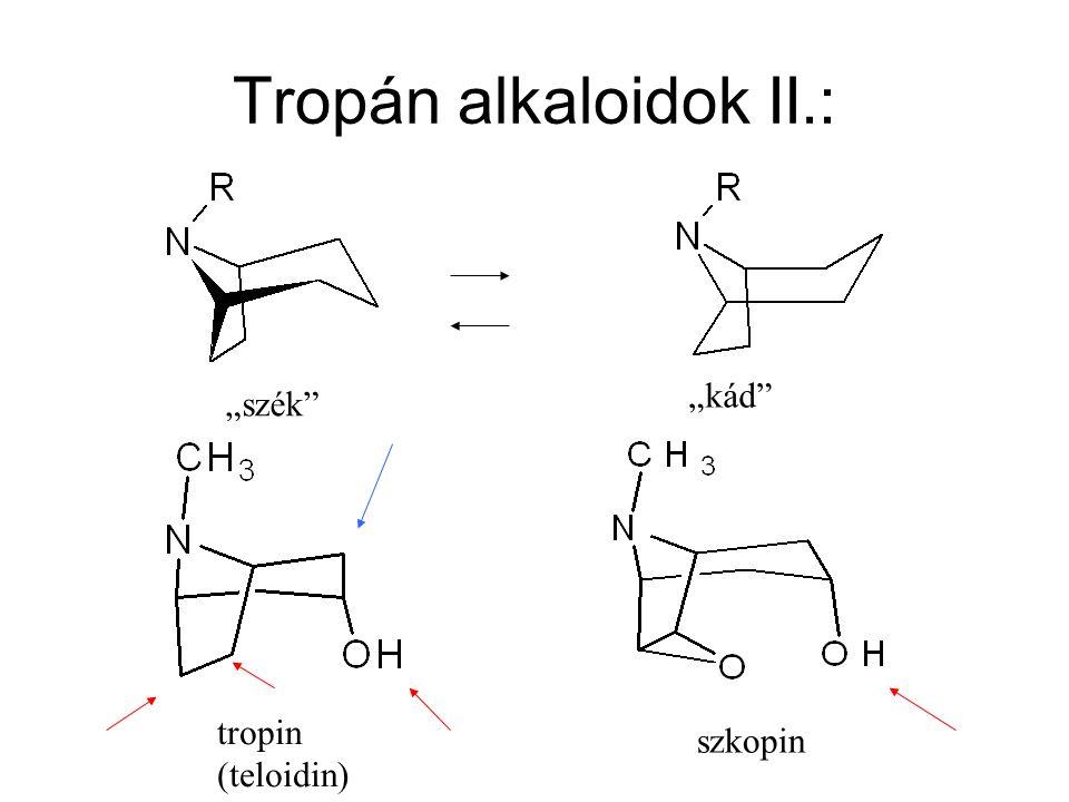 """Tropán alkaloidok II.: """"szék"""" """"kád"""" szkopin tropin (teloidin)"""