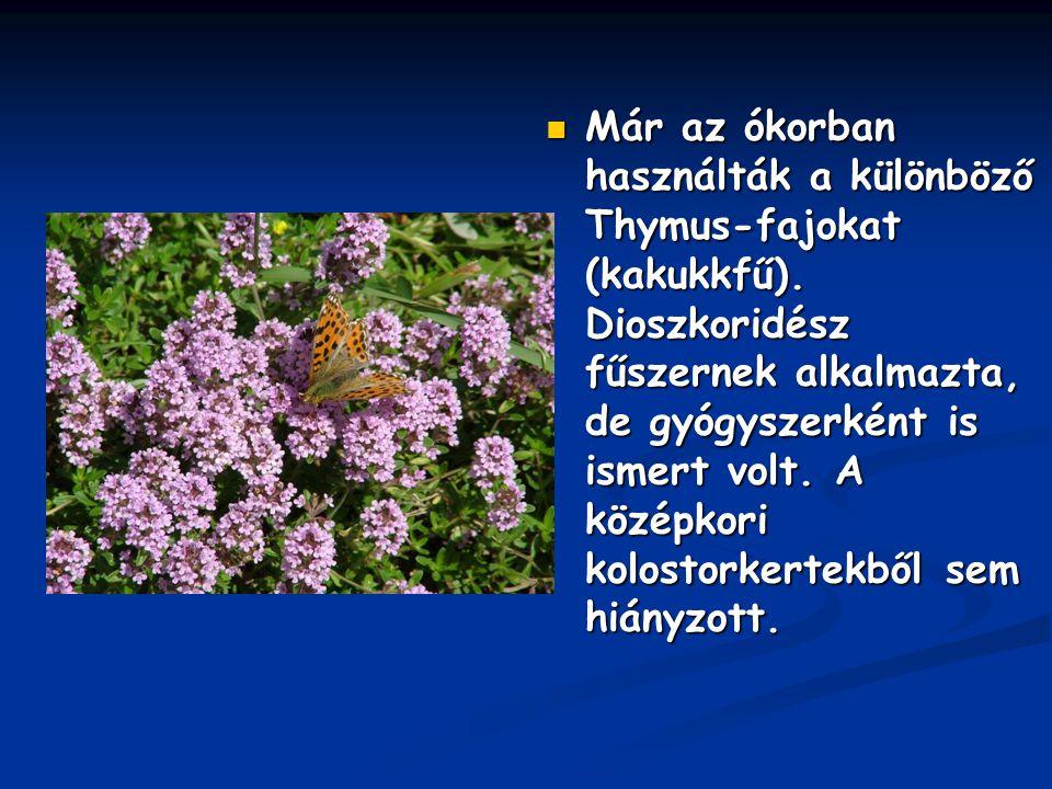 Már az ókorban használták a különböző Thymus-fajokat (kakukkfű). Dioszkoridész fűszernek alkalmazta, de gyógyszerként is ismert volt. A középkori kolo