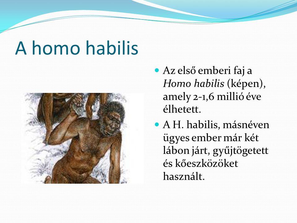 A homo habilis Az első emberi faj a Homo habilis (képen), amely 2-1,6 millió éve élhetett.