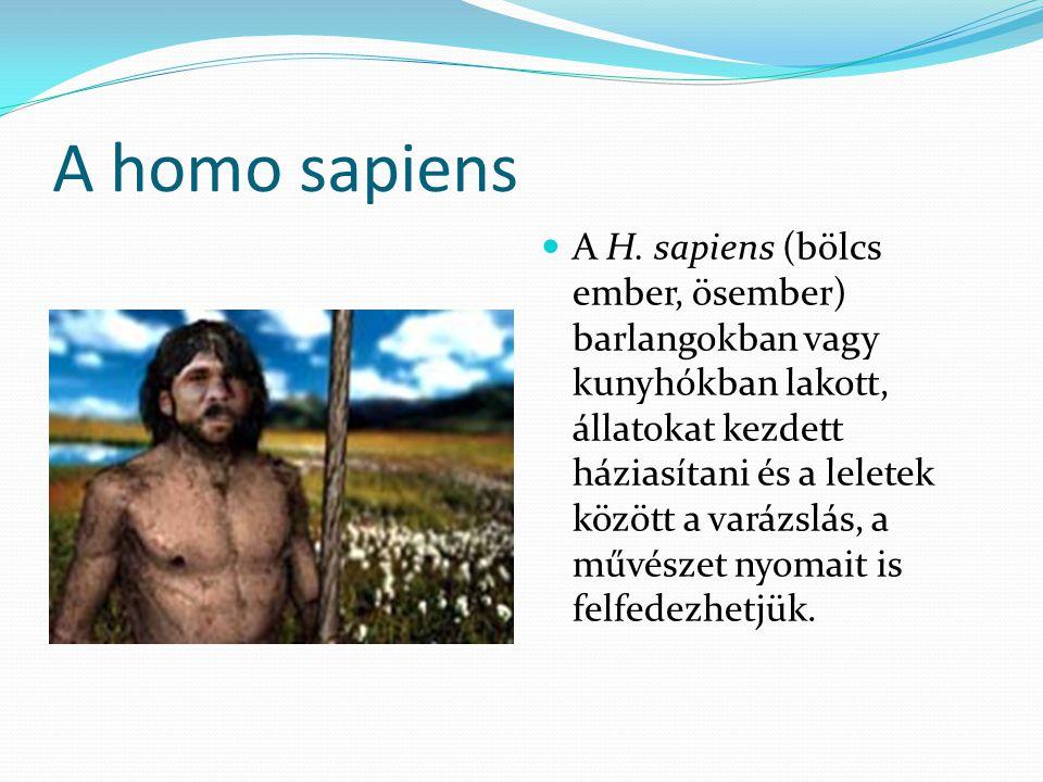 A homo sapiens sapiens Az eljegesedés utáni felmelegedés (kb.