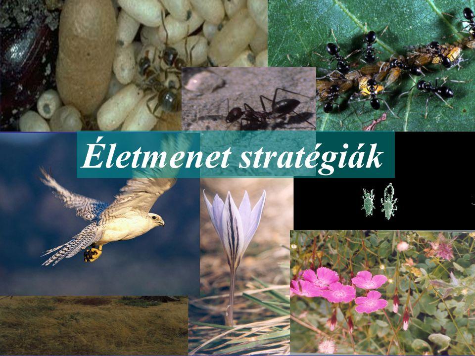 Stratégia: komplex adaptáció, amely az életmódbeli tulajdonságok összehangolt evolúciójának eredménye.