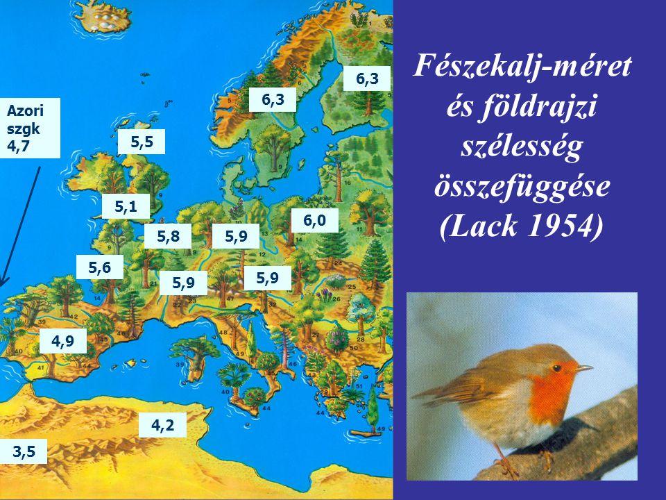 Fészekalj-méret és földrajzi szélesség összefüggése (Lack 1954) 3,5 4,2 Azori szgk 4,7 4,9 5,9 5,6 5,1 5,9 5,8 6,0 5,9 5,5 6,3