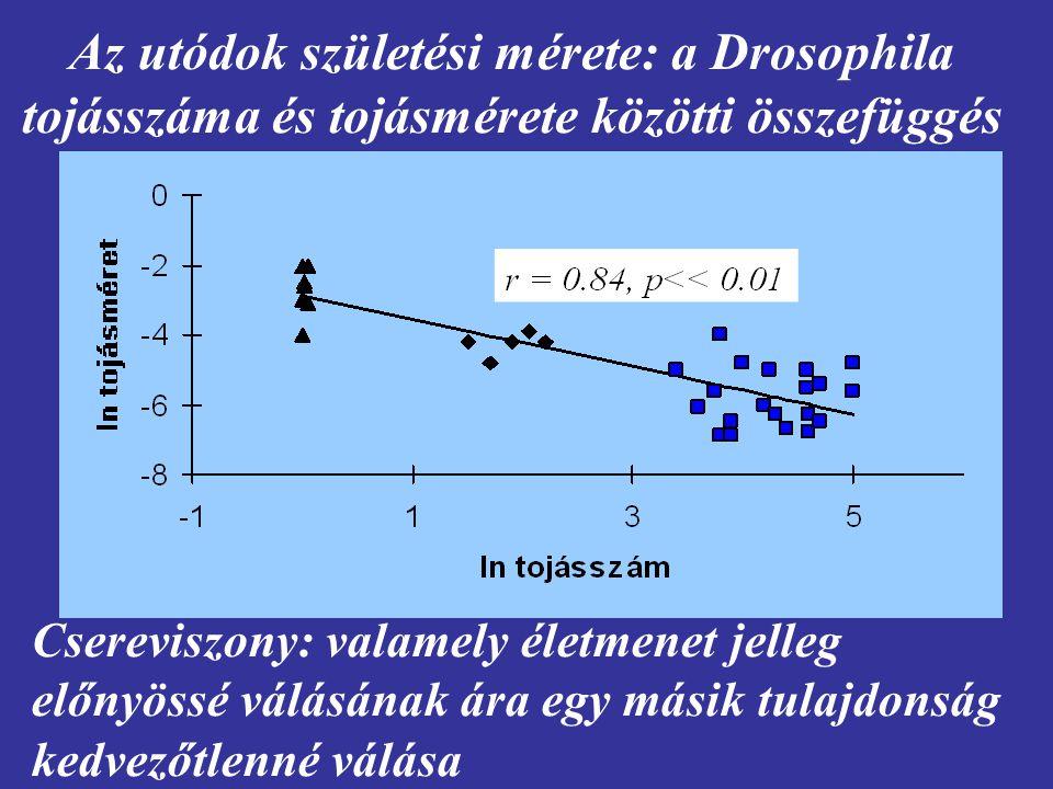 Az utódok születési mérete: a Drosophila tojásszáma és tojásmérete közötti összefüggés Csereviszony: valamely életmenet jelleg előnyössé válásának ára