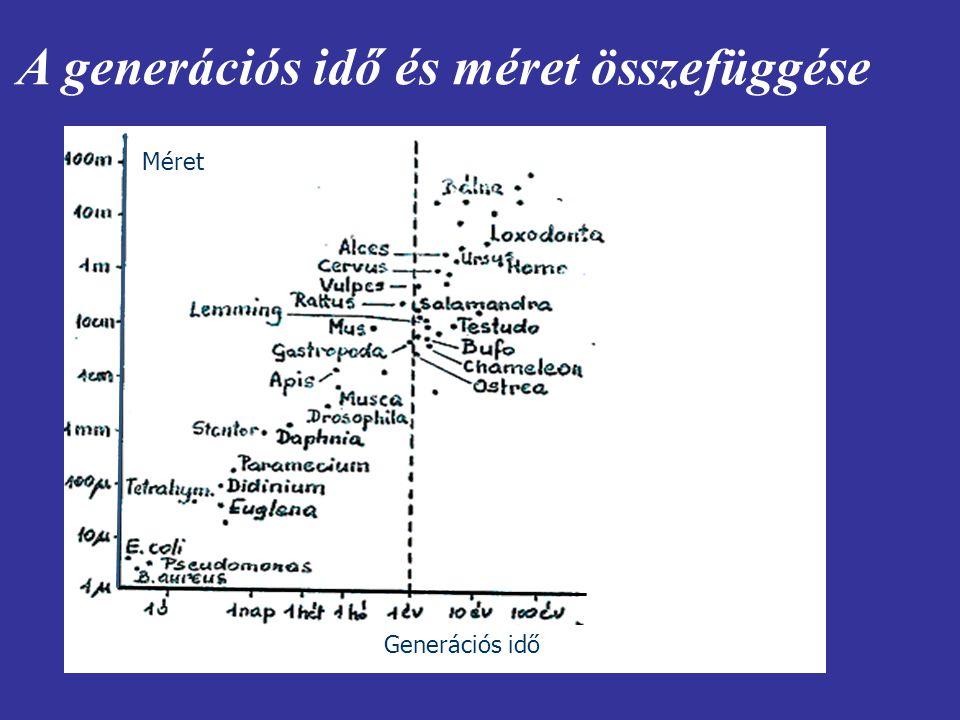 A generációs idő és méret összefüggése Generációs idő Méret