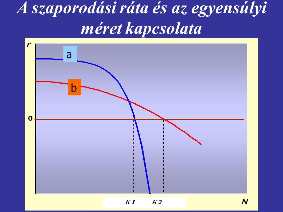 A szaporodási ráta és az egyensúlyi méret kapcsolata a b