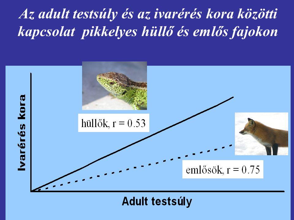 A földrajzi szélesség és a fészekalj mérete közötti összefüggés hipotézisei [1] Nappalok hossza [2] A zsákmány diverzitása [3] Kompetíció hiánya [4] Ragadozók száma [5] Reziduális reproduktív érték (A vonulás és az áttelelés nagy veszélyeket hordoz) [6] A klíma előrejelezhetetlensége