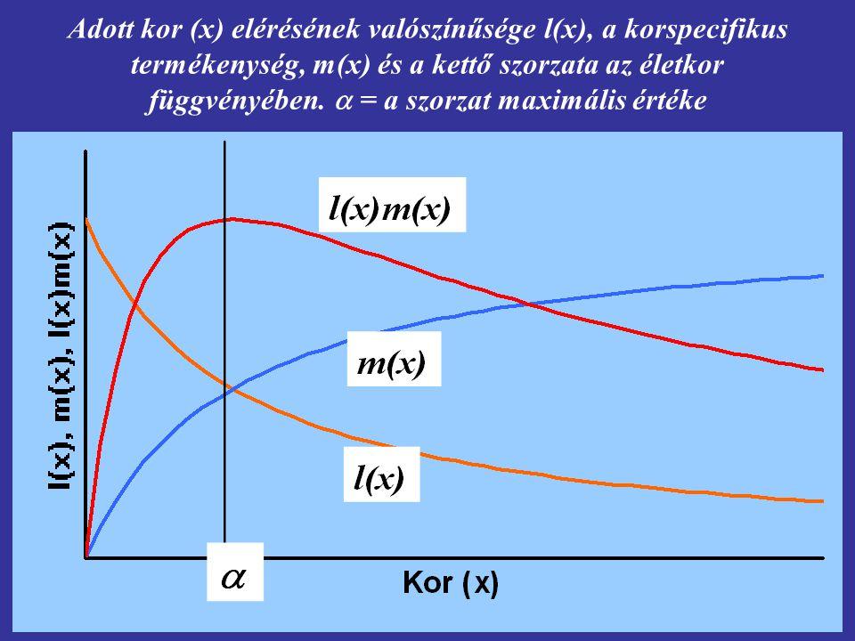 Adott kor (x) elérésének valószínűsége l(x), a korspecifikus termékenység, m(x) és a kettő szorzata az életkor függvényében.  = a szorzat maximális é
