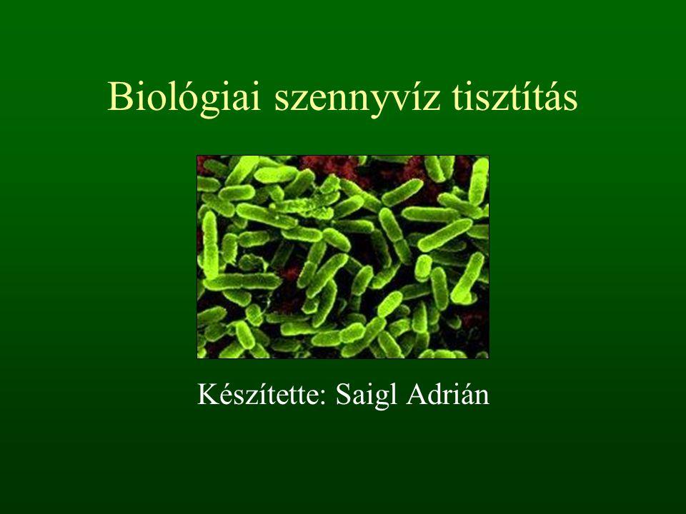 Biológiai szennyvíz tisztítás Készítette: Saigl Adrián