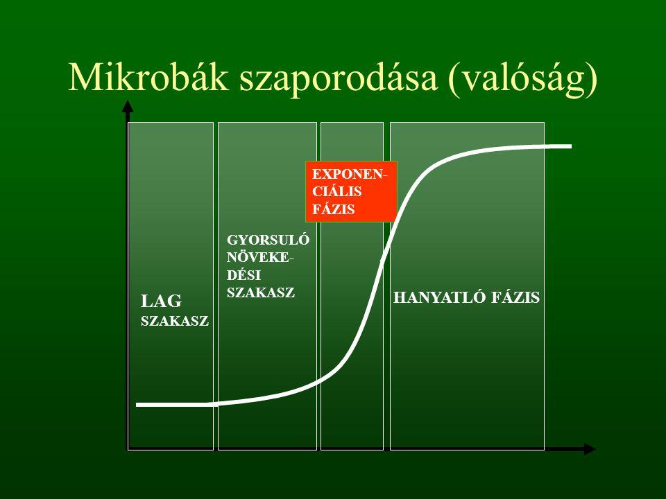 Mikrobák szaporodása (valóság) LAG SZAKASZ GYORSULÓ NÖVEKE- DÉSI SZAKASZ EXPONEN- CIÁLIS FÁZIS HANYATLÓ FÁZIS